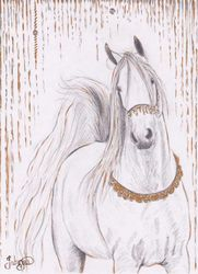 Arabian Bling
