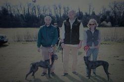 Lurcher Puppy Ch & Res