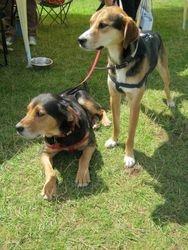 Benji & Lola (was Renee)