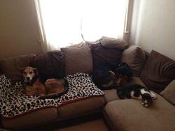 Lola (was Renee), Benji and cat chum