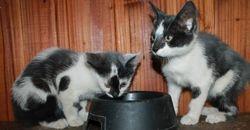 Domino (left) with Ben