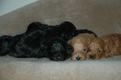 Pups at 3 weeks