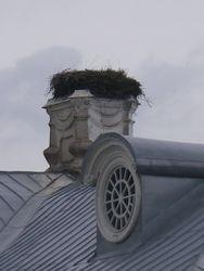 giant nest!
