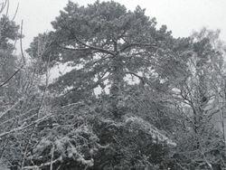 A big tree between the park and Cliffden