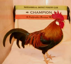 riley  champion s/f crl