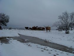 """Winter on the """"Cross & Grave Ranch"""" that's the name of our ranch as that is our brand."""