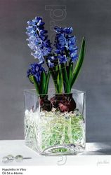 Hyacinths in Vitro