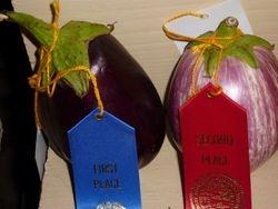 Eggplants 7-10-Stafford Co Fair