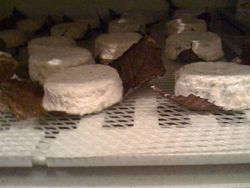 Cave 3: Goat Cheese Cave