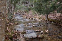 Stream behind Cabins