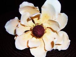 Jaimies Magnolia