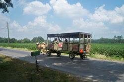 A wagon ride in Amish Country
