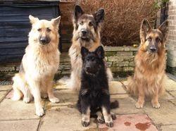 Kara, Max, Eva and Opie