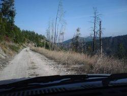 Going up Bear Creek