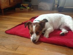 Dewey Resting