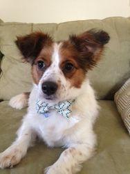 Dewey in a Bow Tie