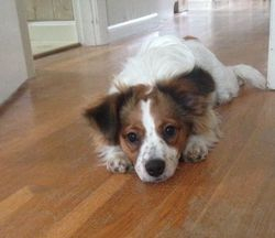Dewey in a cute pose