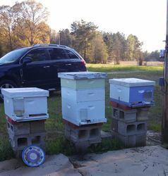 Charli's Bees....