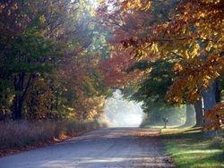 Foggy Wright Road