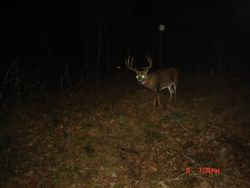 Hopefully someone in the Yellowbrickoutdoors family can come across him this gun season.  What a beauty.