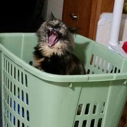 Sady wants to help w/the laundry