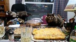 Sady guarding the Thanksgiving dinner