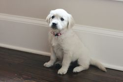 First Day Home