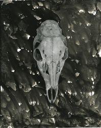 Deer Skull - 01