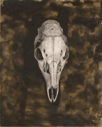Deer Skull - 02