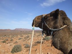 Camel View.