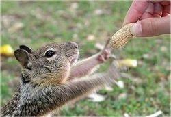 Gimme the peanut!