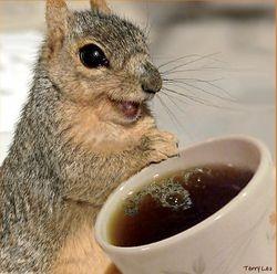 Coffee + Squirrel