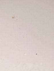 Close up of Sunspot and Mercury