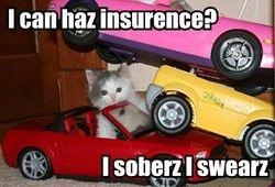 kitty car crash