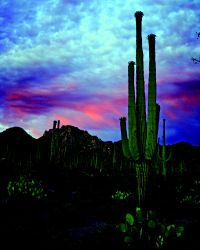 Pink Desert Sky