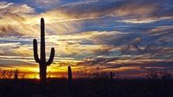 Halo of the Saguaro