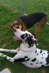 Bella & Clover