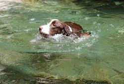 Jake swimming in the old dredge hole.