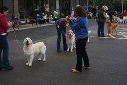 Post Graduate Dog Placing