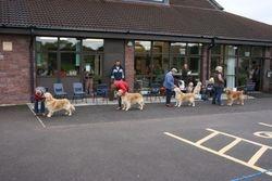 Limit Dog Entry