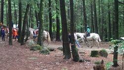 Boys working on Horsemanship merit badge