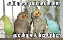 Parakeet...