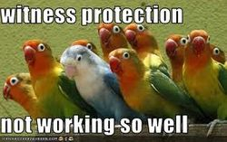 Parakeet Witness Protection
