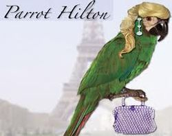 Parrot Hilton