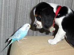 Parakeet Meets the Dog
