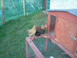 partridge pair