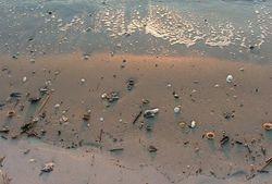 Grand Strand Beach