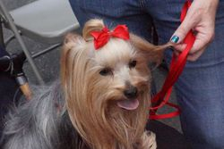 York Assisted Living Dog Show