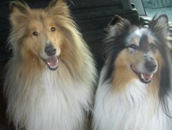 Jake and Lady
