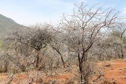 Conditions in Pokot, Kenya